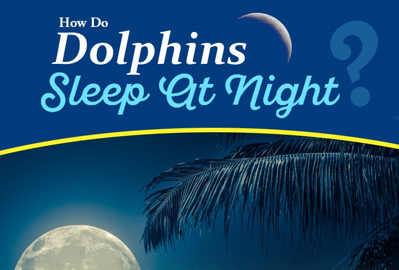 How Do Dolphins Sleep At Night How Various Animals And