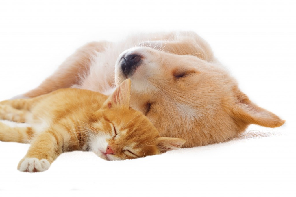 Five Tips for Sleeping with Your Pet